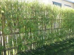 Small Picture Bamboo Garden Decor Best 25 Bamboo Garden Ideas On Pinterest