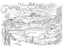 Small Picture Realistic Coloring Pages For Adults Realistic Alligator Coloring