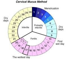 Cervical Mucus Method Natural Birth Control Cervical