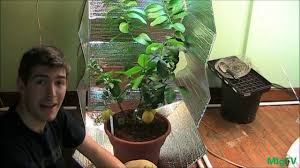 how to make the est diy grow tent for indoor plants