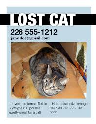 Lost Cat Flyer Lost Pet Flyer Tosya Magdalene Project Org