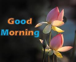 Best Good Morning Images Collection Wallpapers For Whatsapp Amazing Goodmorning Unique Images