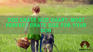 Midwest Icrate Size Breed Chart Dog Crate Size Chart To Fit Your Puppy Hellow Dog