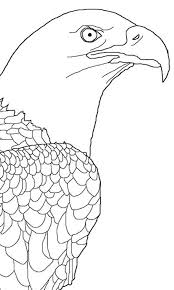 Bald Eagle Picture Coloring Page Netart
