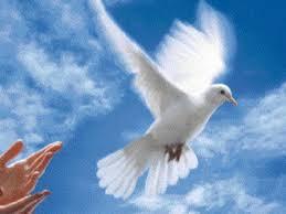 """Résultat de recherche d'images pour """"message de paix"""""""