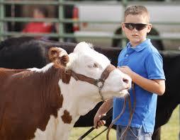 SLIDESHOW: Fair Horse, Cattle, Beef Shows | CKNJ.com