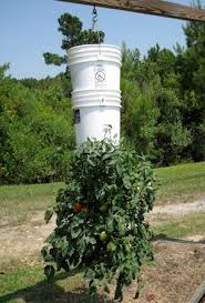 ilration for article titled build an upside down tomato planter for effortless vegetable growing