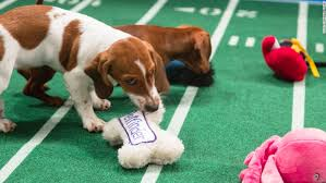 puppy bowl hedgehog cheerleaders. Delighful Bowl Puppy Bowl IX Is Animal Planetu002639s Answer To The Super Bowl In Hedgehog Cheerleaders G