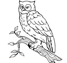 Snowy Owl Coloring Pages Snowy Owl Coloring Page Snowy Owl Coloring