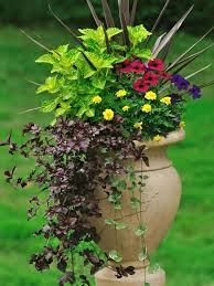best thriller plants for containers