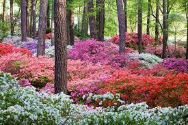 overlook garden at callaway gardens
