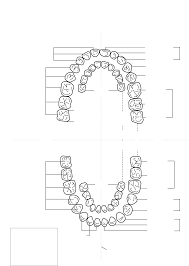 Dental Tooth Numbering Primary Dentition Palmer Letter Chart
