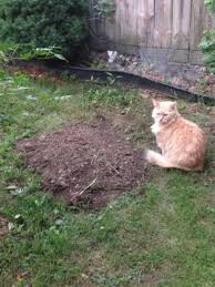 Buried My Dog And A Couple Of Hours Later I Found My Cat Like This Dog Burial Backyard