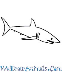 mako shark drawing. Delighful Mako On Mako Shark Drawing W