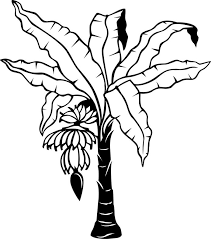 Small Picture Banana Tree Leaves Coloring Coloring Pages