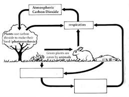carbon cycle worksheets worksheets printable worksheets carbon cycle worksheets carbon cycle worksheet middle school life science by funforester teaching resources tes