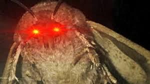 Origin Of The Moth Meme