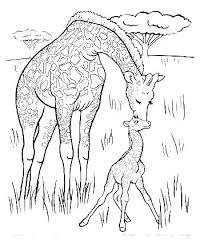Coloring Sheet Giraffe Kryptoskoleninfo