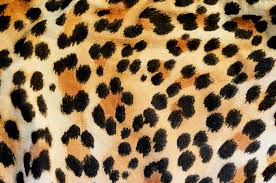 Leopard Print Bedroom Wallpaper Leopard Print Wallpaper Bedroom Leopard Print Wallpaper Bedroom