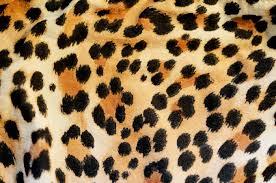 Leopard Print Wallpaper Bedroom Leopard Print Wallpaper Bedroom Leopard Print Wallpaper Bedroom