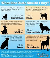 Kong Crate Size Chart Crate Size For Your Dog Dog Crate Sizes Dog Crate Dog