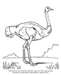 Small Picture Ostrich is Cannot Fly Bird Coloring Page Color Luna