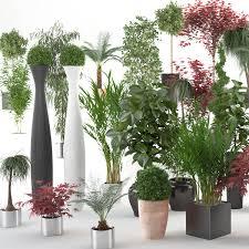 3D models  Interior Plants