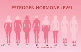 Estrogen Levels Chart Estrogen Hormone Levels Chart Menopause Vector Stock
