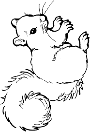 Red Squirrel Coloring Page Squirrel Coloring Page Ftwapme