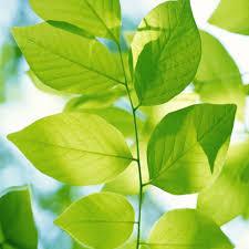 Sulle foglie
