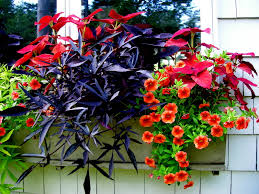 98 Best Containers Shade Images On Pinterest  Pots Plants And Container Garden Shade Plants