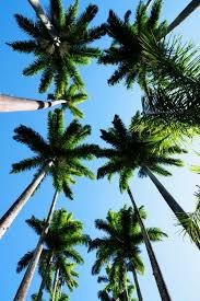 Simple Palm Trees Tumblr Vertical Find This Pin And More On Throughout Models Design