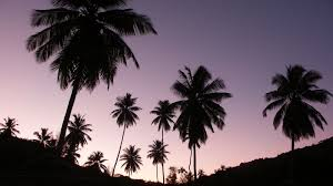 palm trees tumblr. California-palm-trees-tumblr-background-wallpaper-2 (1).jpg Palm Trees Tumblr
