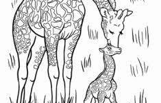 Kleurplaat Wilde Dieren Nieuw Baby Giraffe Coloring Page