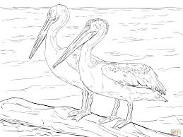 Small Picture American White Pelicans coloring page Free Printable Coloring Pages