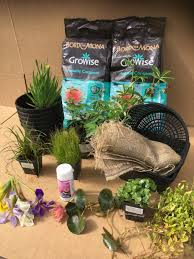 beginners pond plant collection for