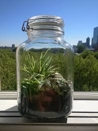 picture of do it your self sustaining ecosystem