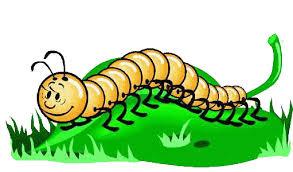 Resultado de imagem para centipede cartoon images