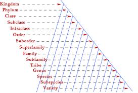 Nomenclature Classification