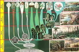 растений Эволюция растений