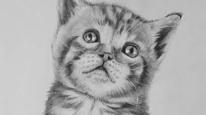 realistic cat drawing in pencil.  Pencil Intended Realistic Cat Drawing In Pencil U