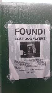 lost and found flyers found lost dog flyers funny