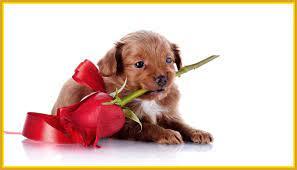 Dog Valentine Wallpaper, Dog Wallpapers ...