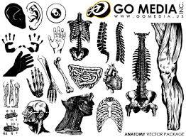 移動メディア制作ベクター素材 人間の体の部分や臓器 無料素材