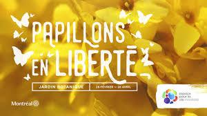 Papillons En Liberté 2019 Butterflies Go Free 2019