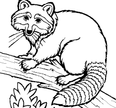 Small Picture color Raccoon coloring pages for kids Coloring Pages Clip Art