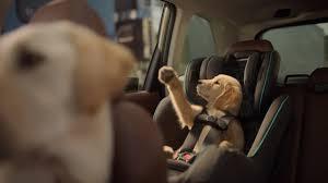 Bud Light Dog Driving Commercial Subaru Dog Tested I Subaru Commercial I Honk