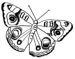 Small Picture FREE Butterfly Coloring Pages Buckeye Butterfly