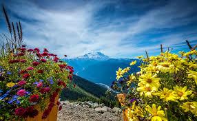 Bildergebnis für Mount Rainier with beautiful flowers in September