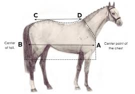 How To Measure Your Horse For A Horse Blanket Performance